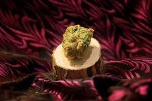 canada online marijuana jazz bud